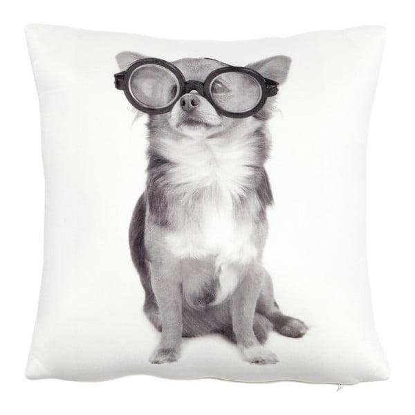 Poduszka z wypełnieniem Dog with Glasses, 30x30 cm