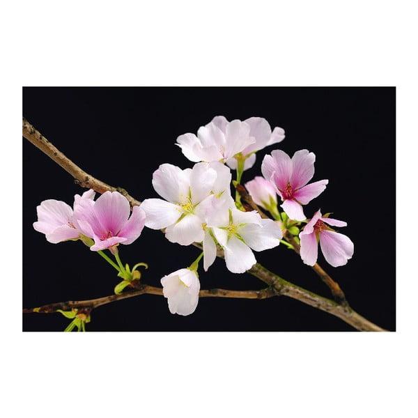 Plakat wielkoformatowy Cherry Blossoms, 175x115 cm