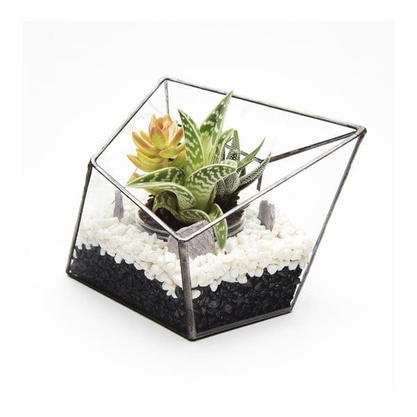 Terrarium z roślinami Diamond