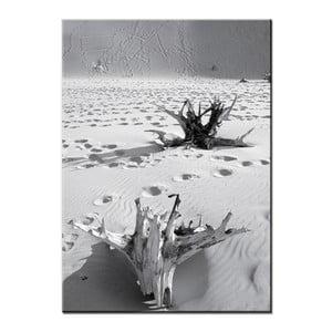 Obraz Root, 50x70 cm