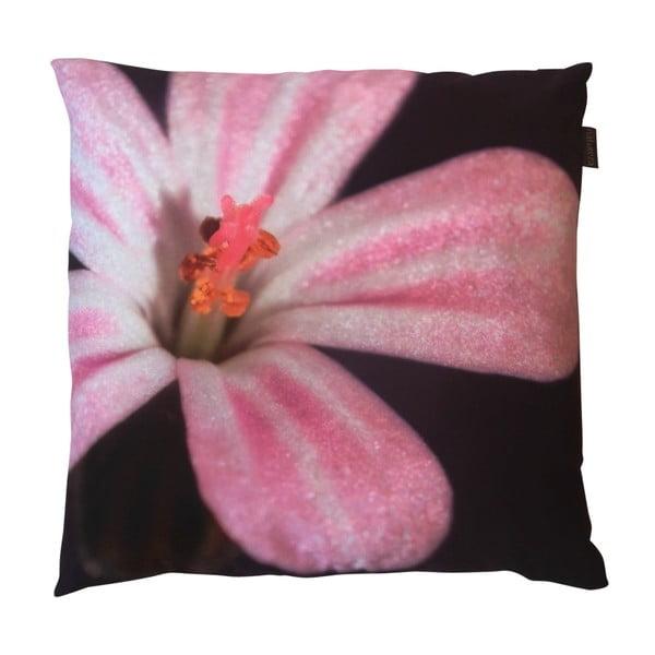 Poduszka z wypełnieniem Purpurowa, 50x50 cm