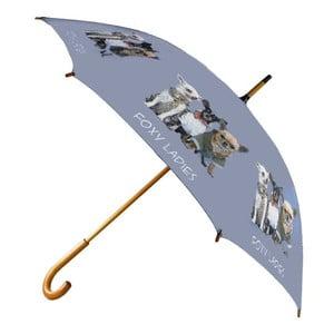 Parasol Chihuahua