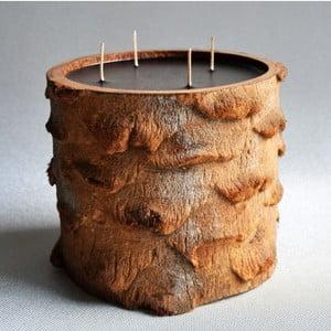 Palmowa świeczka Legno Black Bee o zapachu lilii wodnej, 120 godz.