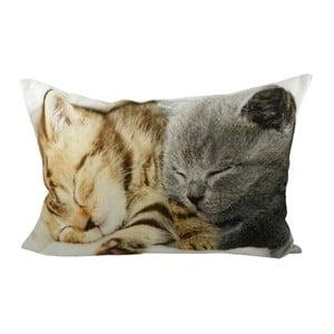 Poduszka Kittens On Blanket 50x35 cm
