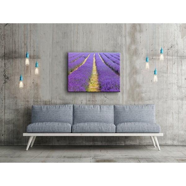 Obraz In Lavender, 60x80 cm