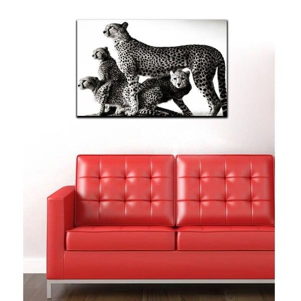 Obraz Black&White Wildness, 45x70 cm