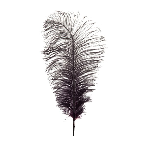Dekoracyjne   strusie pióro Aubergine, wysokość 35 cm