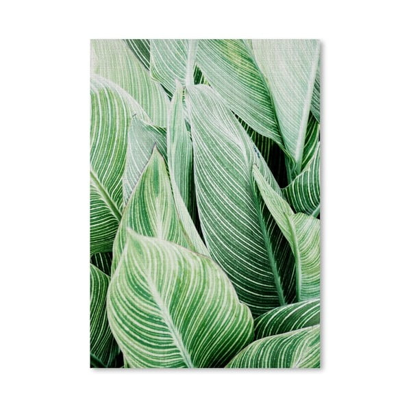 Plakat Tropical Leaves