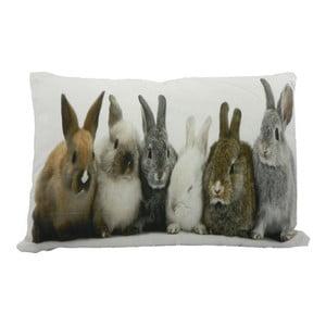 Poduszka Rabbits 50x35 cm