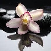 Obraz na szkle Orchidea Zen II, 50x50 cm