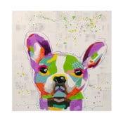 Obraz na płótnie Bulldog, 80x80 cm