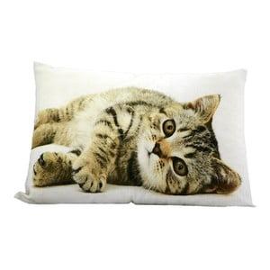 Poduszka Cat 50x35 cm