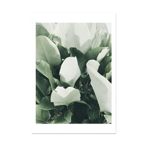 Plakat HF Living Botanic Thorn, 21x30 cm