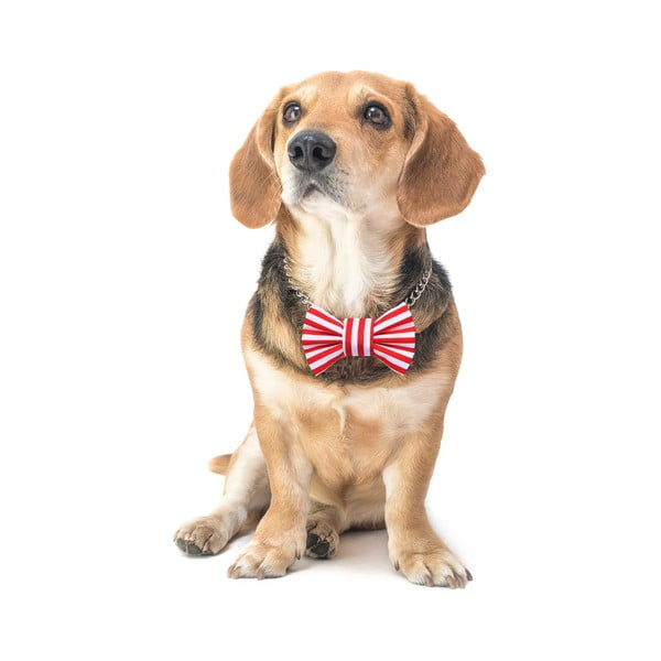 Mucha dla psa Funky Dog Bow Ties, roz. S, w czerwone pasy