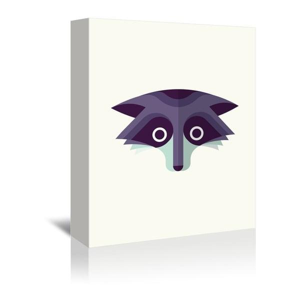 Obraz na płótnie Raccoon