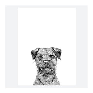 Plakat Baxter The Border Terrier, 30x40 cm