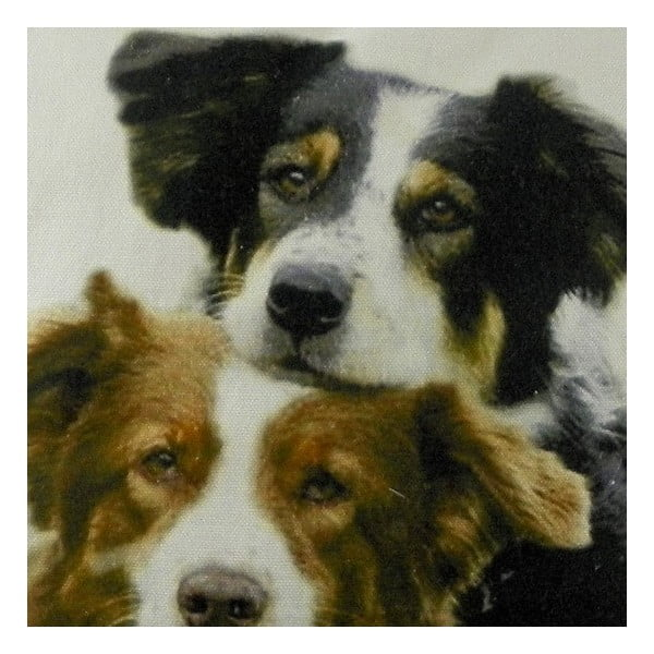 Poduszka Mars&More Border Collies, 50x50  cm