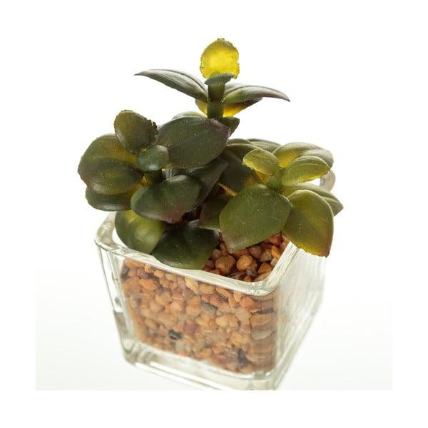 Zestaw 6 dekoracyjnych kaktusów Unimasa