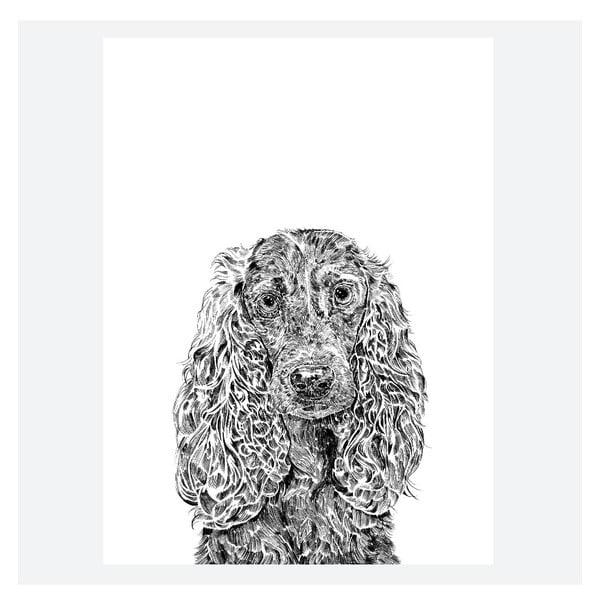 Plakat Chester the Cocker Spaniel, 30x40 cm