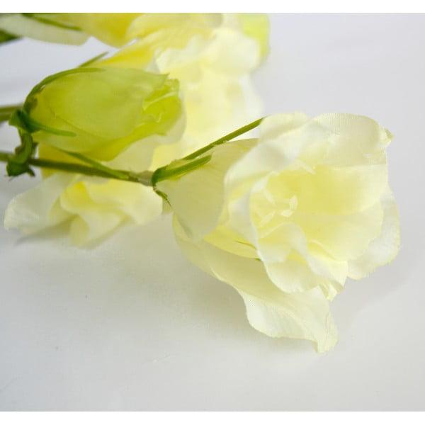 Roślina dekoracyjna Grandiflorum