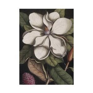 Ścierka kuchenna Jay Biologica Magnolia