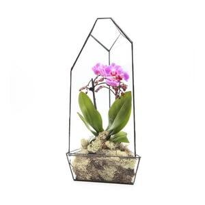 Terrarium z roślinami Super Aztec Orchid House