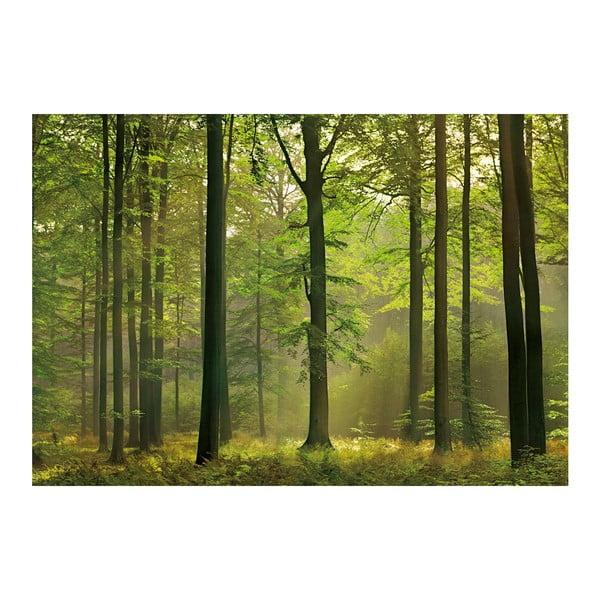 Wielkoformatowa tapeta Las jesienią, 366x254 cm