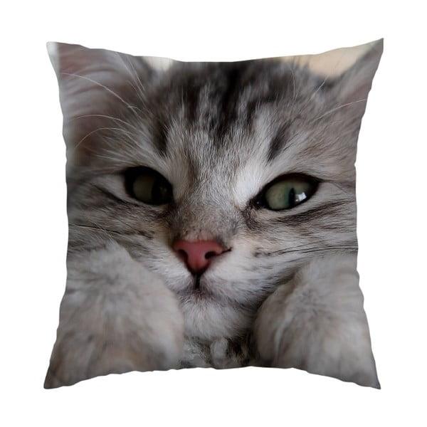 Poduszka Cute Cat, 40x40 cm