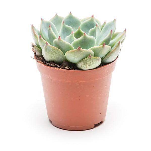 Doniczka Individual Succulent