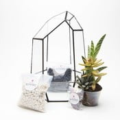 Terrarium z roślinami Aztec Gem DIY