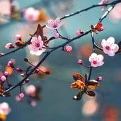 Szklany obraz Beautiful Spring Day 30x30 cm