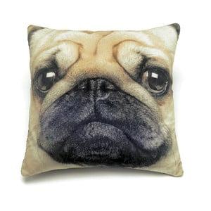 Poduszka Pug