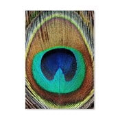 Plakat Peacock Feather
