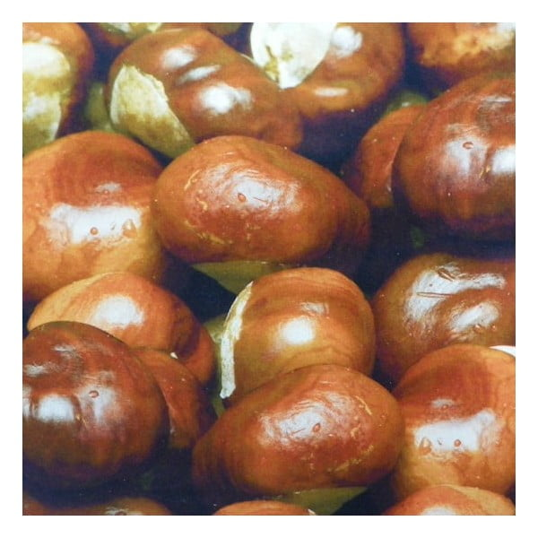 Poduszka Wood Chesnuts 50x50 cm