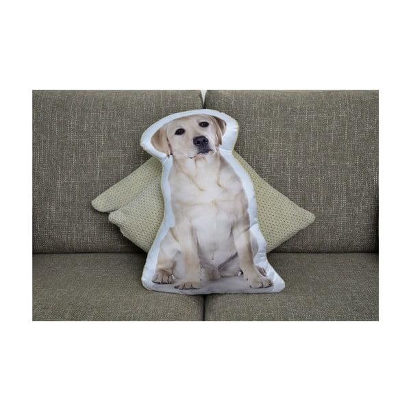 Poduszeczka Adorable Cushions Labrador retriever