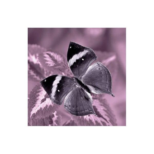 Zestaw 3 obrazów na szkle Motyle, 30x30 cm