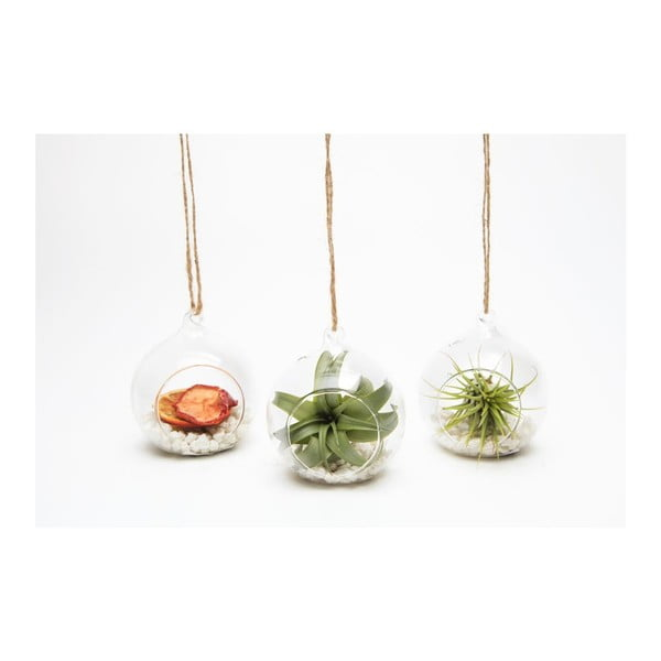 Terrarium z roślinami Tillandsia