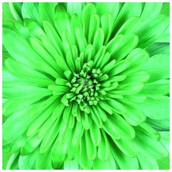 Obraz na szkle Zieleń, 50x50 cm