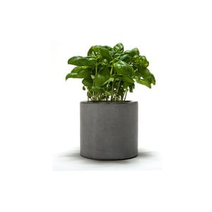 Doniczka betonowa Spicepot 12