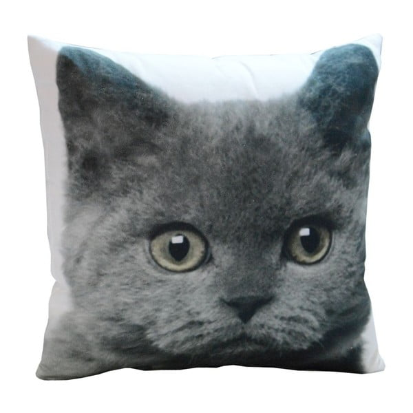 Poduszka Grey Cat, 45x45 cm