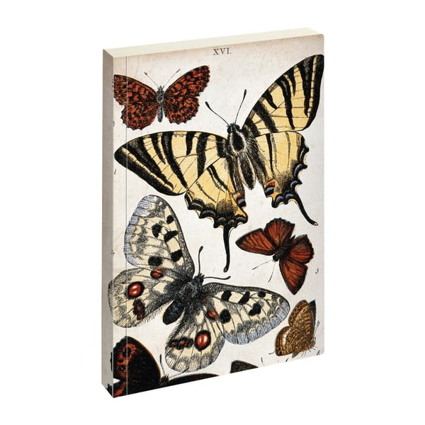 Notes Jay Biologica Butterfly