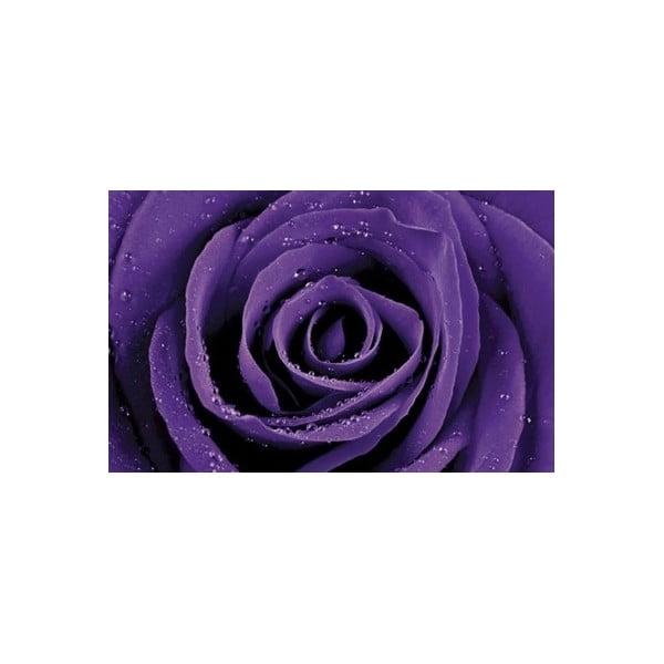 Fotoobraz Violet Rose, 51x81 cm