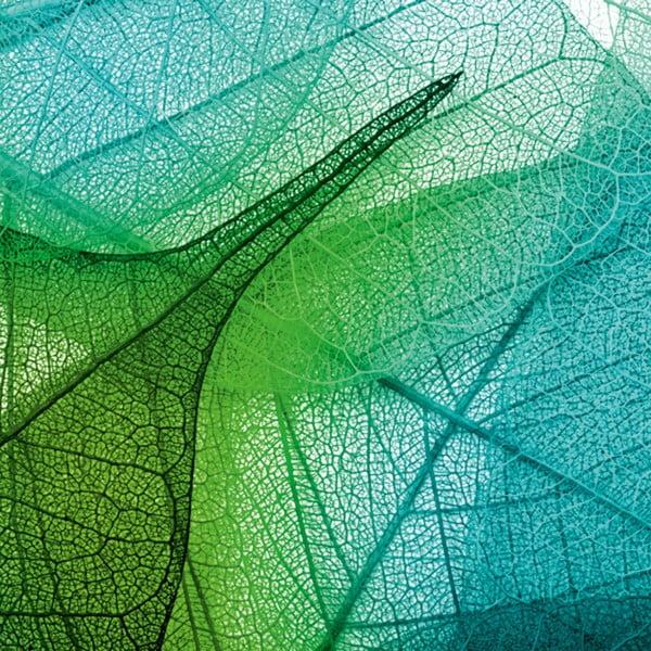 Obraz Struktura liści, 60x60 cm