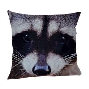 Poduszka Animals Raccoon, 42x42 cm
