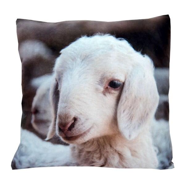 Poduszka Animals Sheep, 42x42 cm