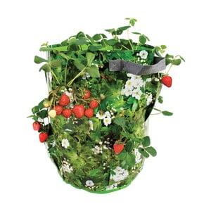 Pojemnik do uprawy truskawek i ziół Esschert Design Berry