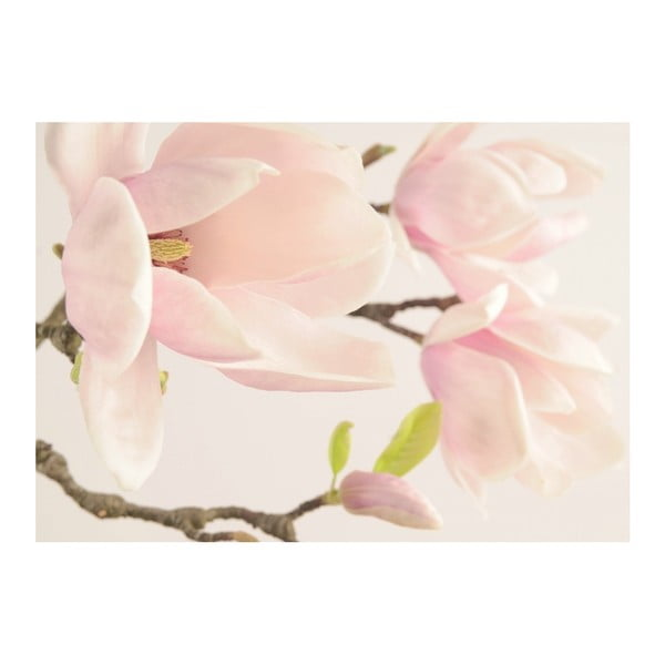 Fototapeta Magnolia, 400x280 cm