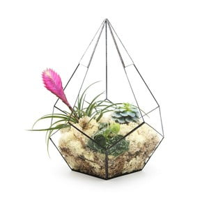 Terrarium z roślinami Super Aztec Prims