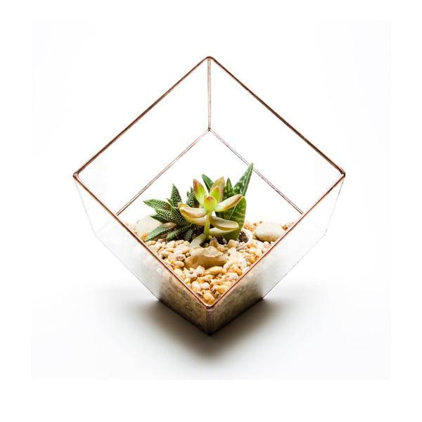 Terrarium z roślinami Cube Terrarium, w jasnej ramce