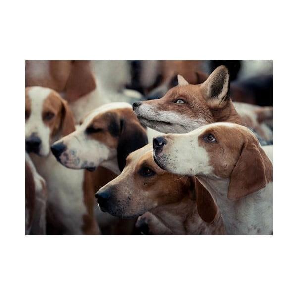 Dywanik Foxhounds 75x50 cm